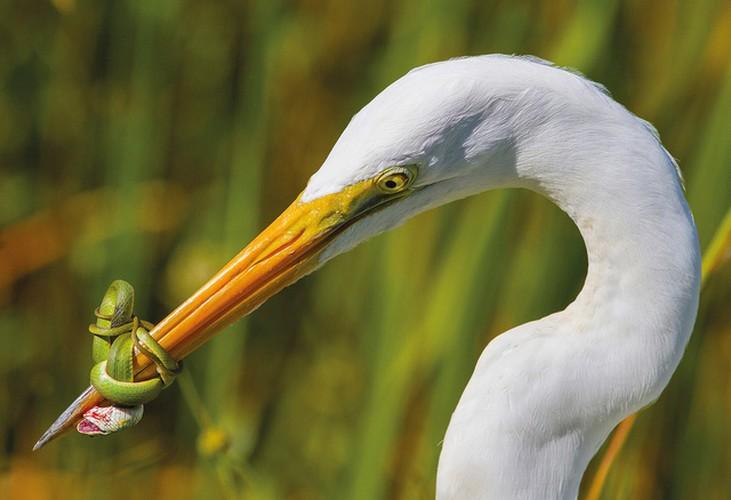 Anh cuc dep ve cac loai chim doat giai thuong nhiep anh 2017-Hinh-12