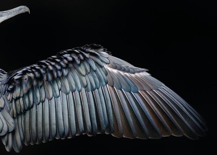 Anh cuc dep ve cac loai chim doat giai thuong nhiep anh 2017-Hinh-7