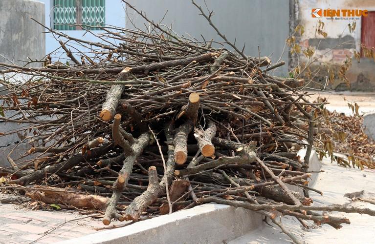 Can canh hang loat cay xanh bi chat ha de don via he Ha Noi-Hinh-10