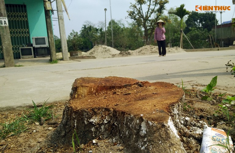 Can canh hang loat cay xanh bi chat ha de don via he Ha Noi-Hinh-3