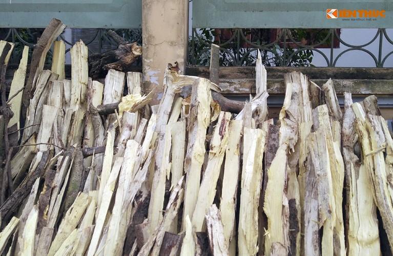 Can canh hang loat cay xanh bi chat ha de don via he Ha Noi-Hinh-9