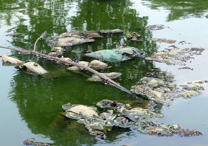 Anh: Kinh hoang canh bat huong va rac ban ngap ho Den Lu - Ha Noi-Hinh-5