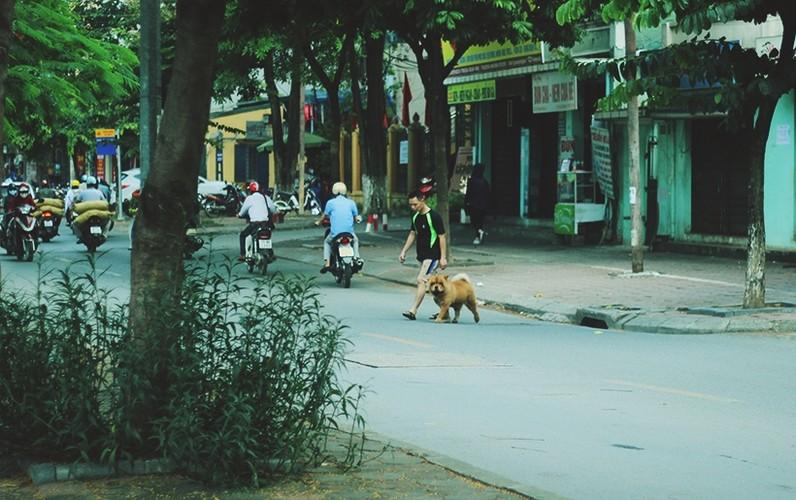 Anh: Cho nuoi chay long nhong khong ro mom truoc gio G-Hinh-10