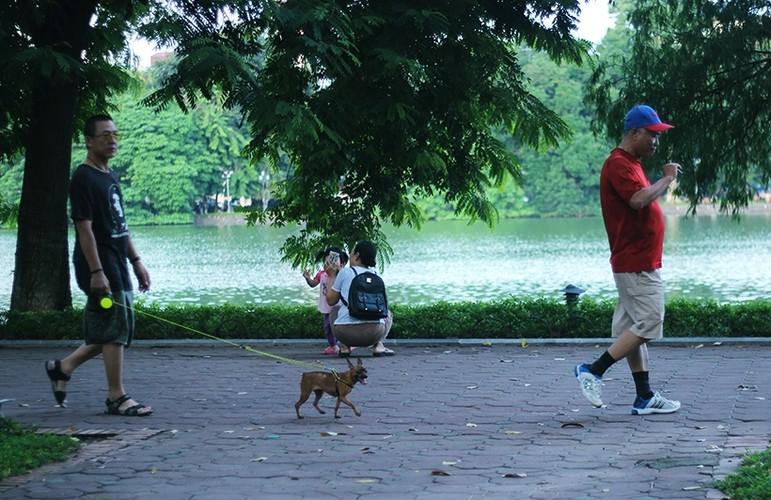 "Bat chap lenh phat, cho khong ro mom ""tung tang"" tren pho Ha Noi-Hinh-7"
