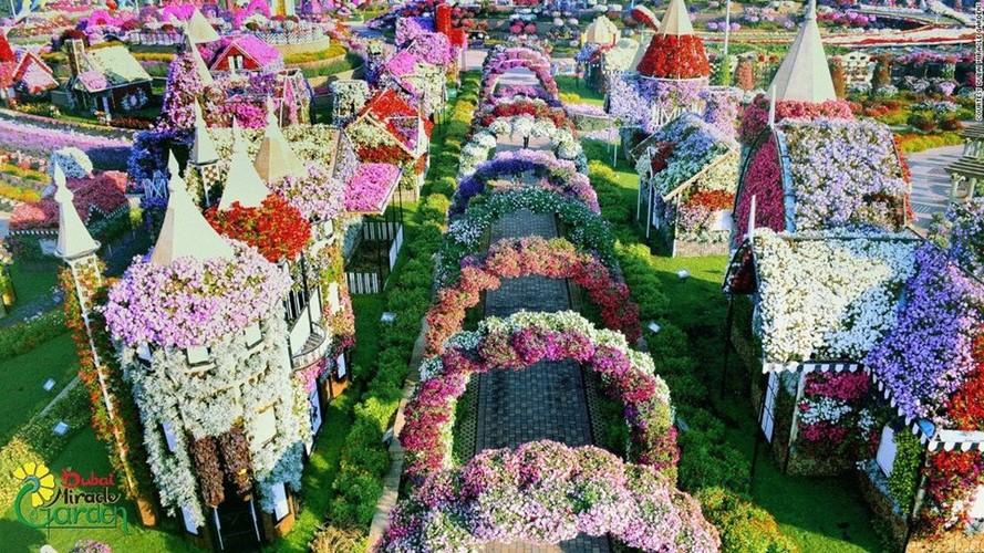 65 trieu bong hoa ruc ro giua Dubai kho can-Hinh-2