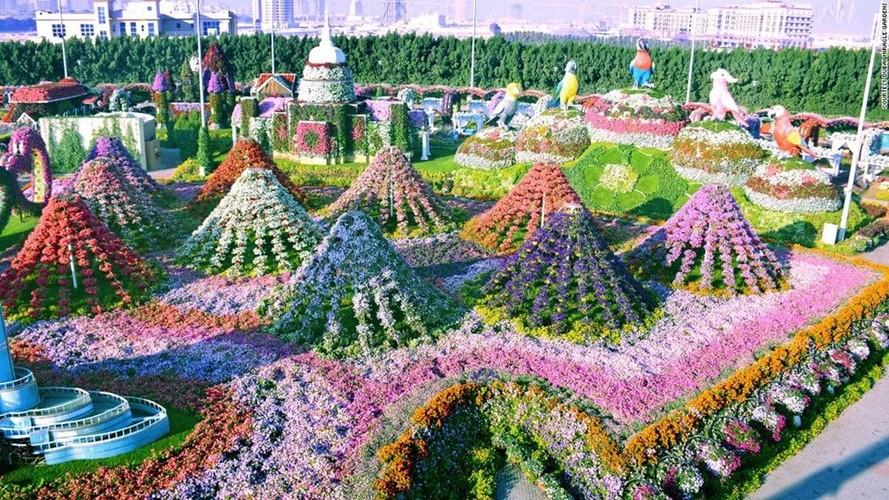 65 trieu bong hoa ruc ro giua Dubai kho can-Hinh-3