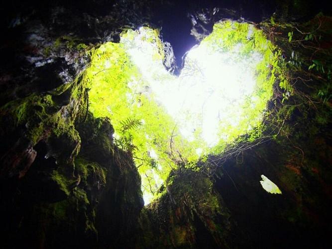 Hang dong hinh trai tim trong rung gia hop hon dan phuot-Hinh-8