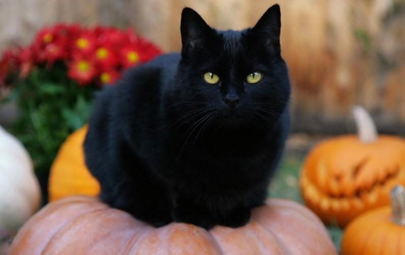Thanh nien Viet da biet het y nghia cac bieu tuong Halloween?