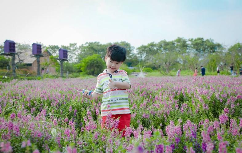 Me man thao nguyen hoa bat ngan giua long Ha Noi-Hinh-6