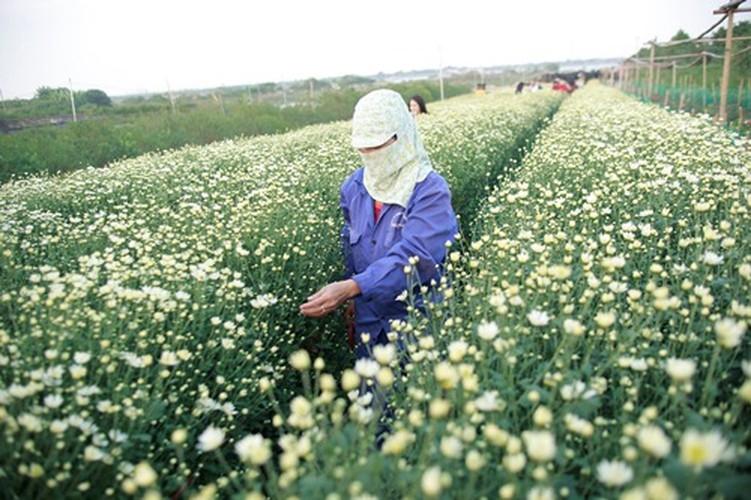 Kết quả hình ảnh cho Làng hoa Nhật Tân