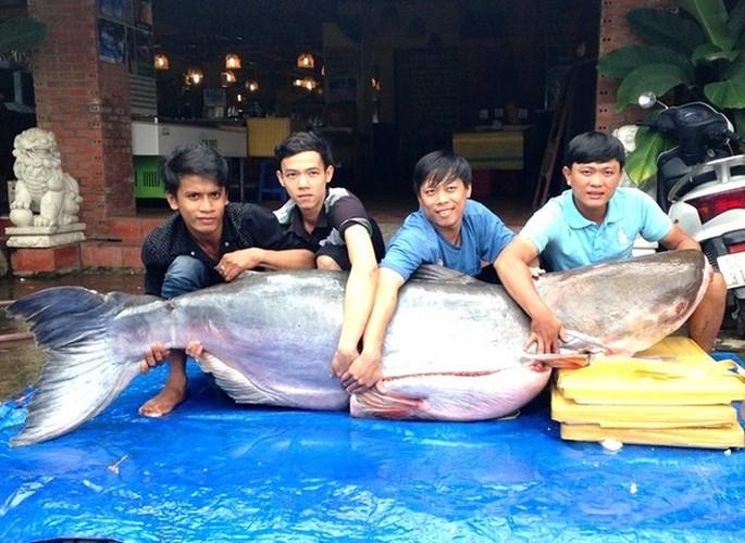 Can canh ca tra khung 200kg len ban nhau dai gia Sai Gon-Hinh-4