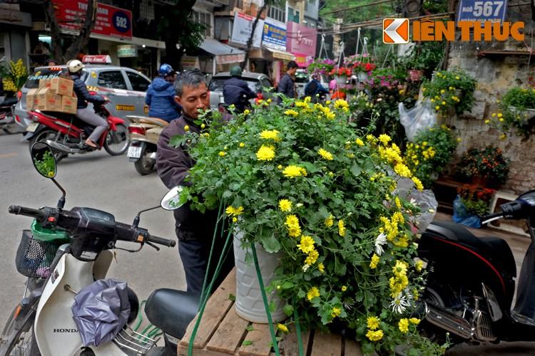 Anh: Sac hoa ruc ro tai pho hoa noi tieng nhat Ha Thanh-Hinh-10
