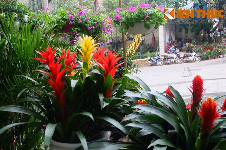 Anh: Sac hoa ruc ro tai pho hoa noi tieng nhat Ha Thanh-Hinh-11