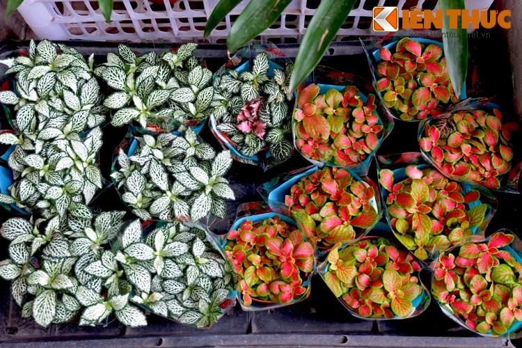 Anh: Sac hoa ruc ro tai pho hoa noi tieng nhat Ha Thanh-Hinh-12