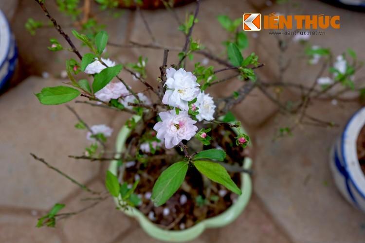 Anh: Sac hoa ruc ro tai pho hoa noi tieng nhat Ha Thanh-Hinh-14