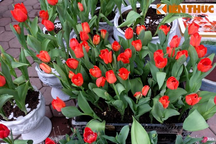 Anh: Sac hoa ruc ro tai pho hoa noi tieng nhat Ha Thanh-Hinh-15