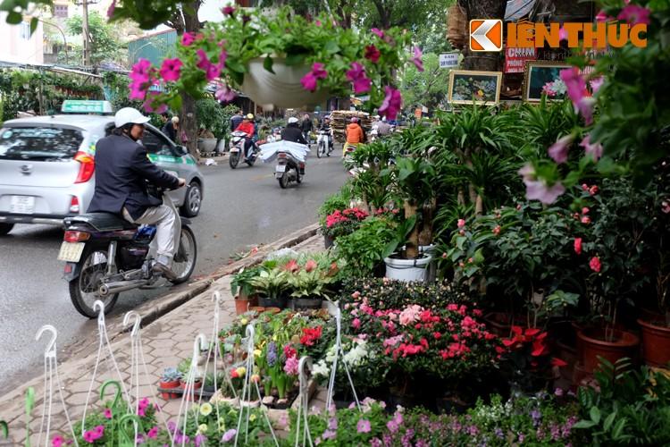 Anh: Sac hoa ruc ro tai pho hoa noi tieng nhat Ha Thanh-Hinh-16