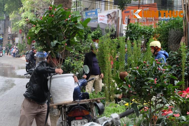 Anh: Sac hoa ruc ro tai pho hoa noi tieng nhat Ha Thanh-Hinh-17