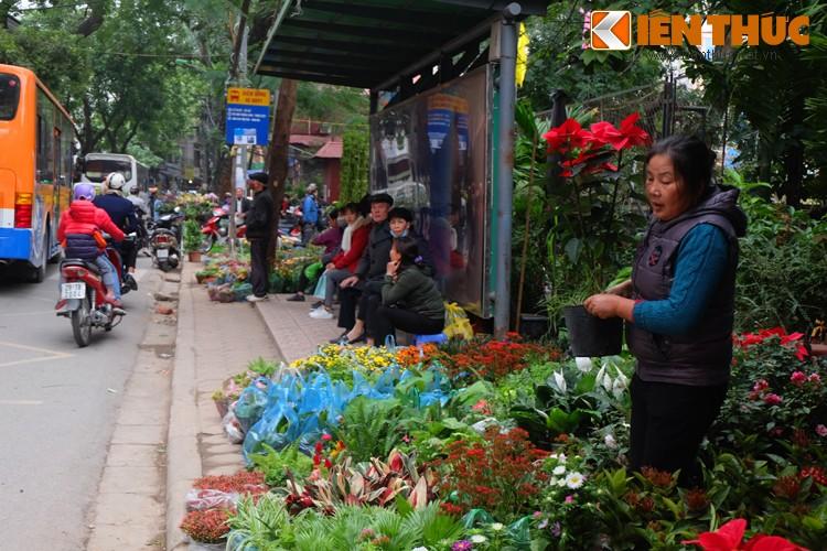 Anh: Sac hoa ruc ro tai pho hoa noi tieng nhat Ha Thanh-Hinh-18