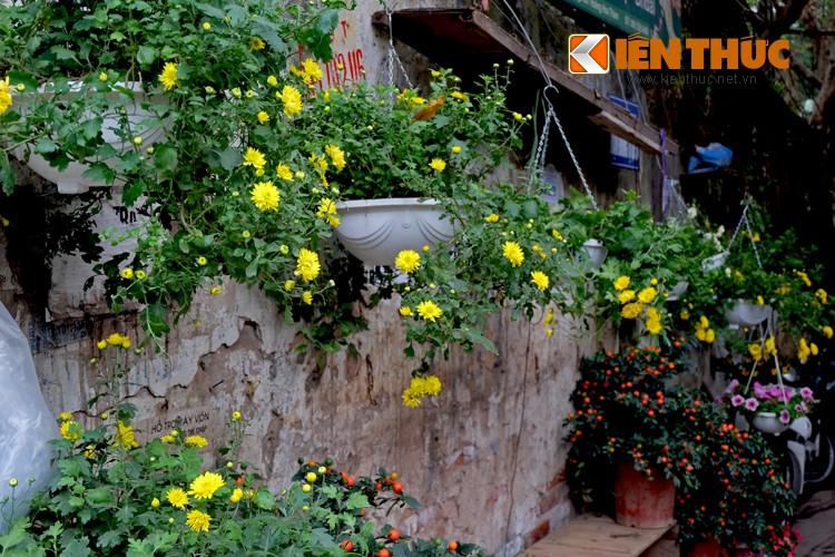 Anh: Sac hoa ruc ro tai pho hoa noi tieng nhat Ha Thanh-Hinh-19