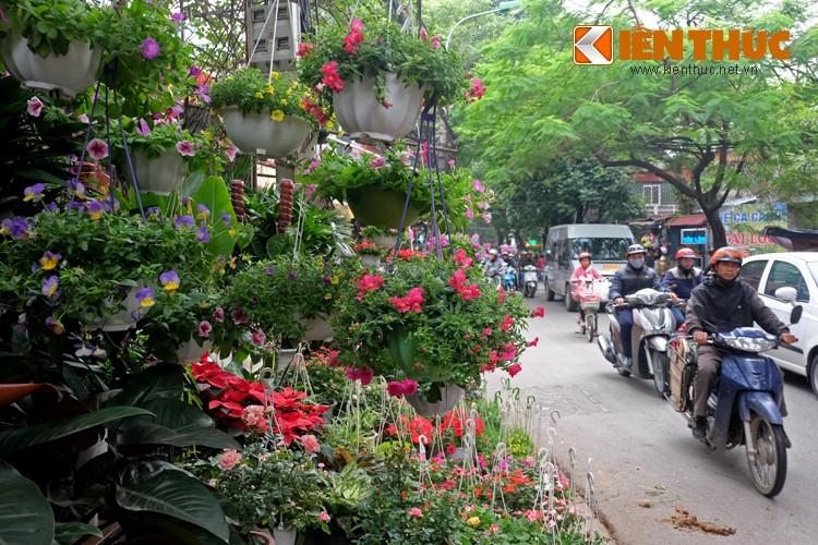 Anh: Sac hoa ruc ro tai pho hoa noi tieng nhat Ha Thanh-Hinh-2