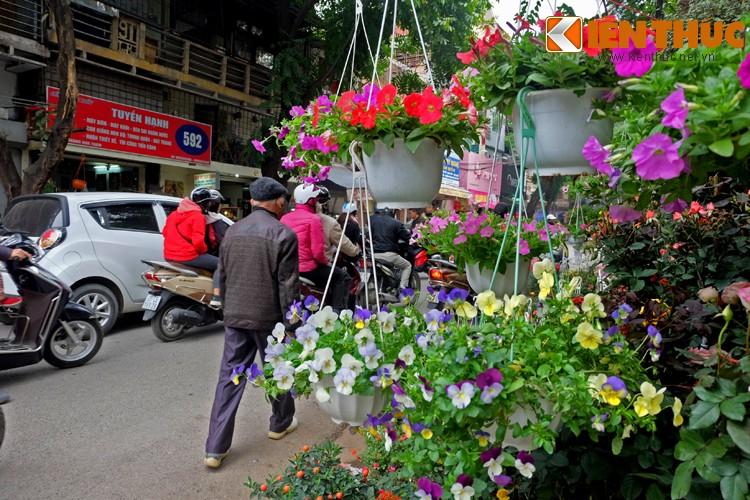 Anh: Sac hoa ruc ro tai pho hoa noi tieng nhat Ha Thanh-Hinh-3