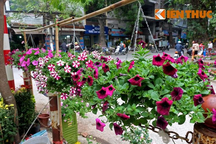Anh: Sac hoa ruc ro tai pho hoa noi tieng nhat Ha Thanh-Hinh-4