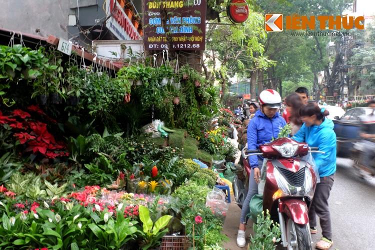Anh: Sac hoa ruc ro tai pho hoa noi tieng nhat Ha Thanh-Hinh-6