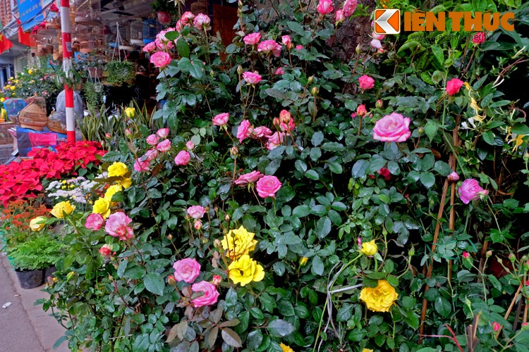 Anh: Sac hoa ruc ro tai pho hoa noi tieng nhat Ha Thanh-Hinh-7