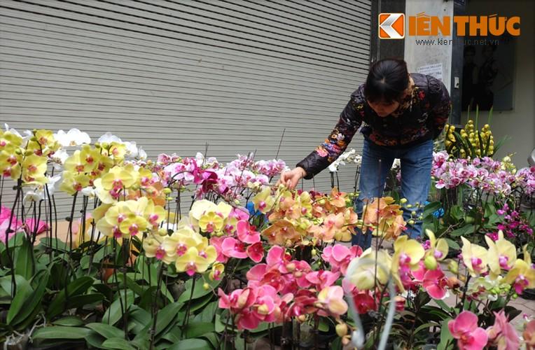 Anh: Sac hoa ruc ro tai pho hoa noi tieng nhat Ha Thanh-Hinh-8