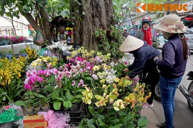 Anh: Sac hoa ruc ro tai pho hoa noi tieng nhat Ha Thanh