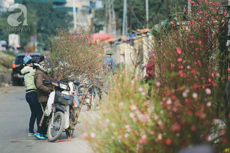 Anh dep: Nguoi Ha Noi ben hoa dao Tet-Hinh-3