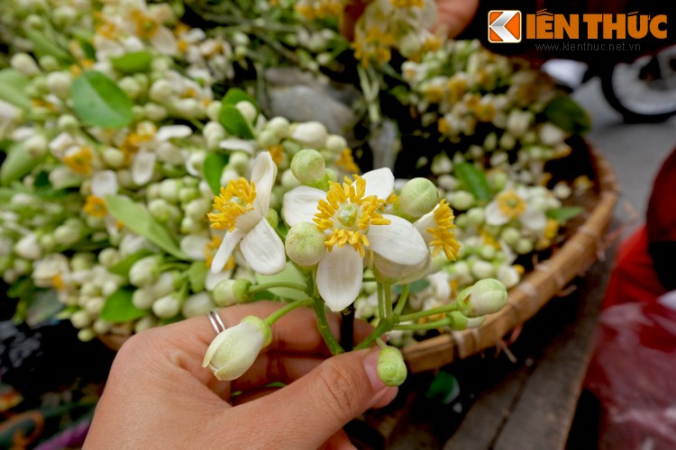 Anh: Nong nan hoa buoi ngat huong pho Ha Noi-Hinh-6