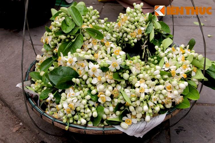 Anh: Nong nan hoa buoi ngat huong pho Ha Noi