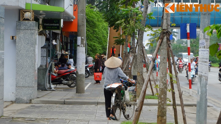Chum anh: Hang rong dat sau vach ke via he muu sinh-Hinh-12
