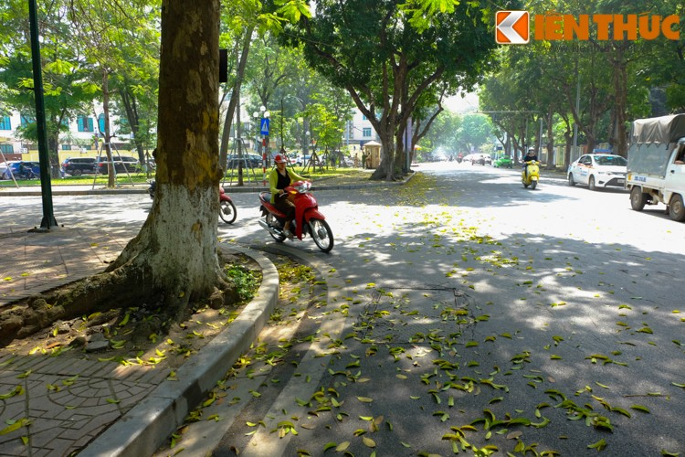 Anh: Lang man nhung con duong trai day la vang o Ha Noi-Hinh-11