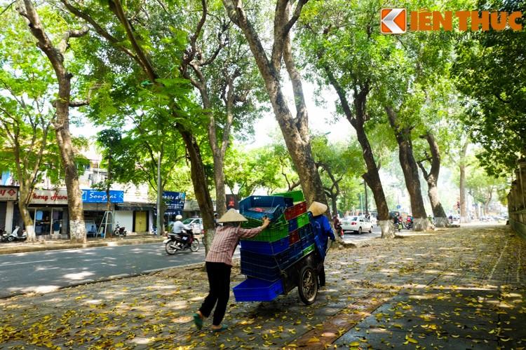 Anh: Lang man nhung con duong trai day la vang o Ha Noi-Hinh-15