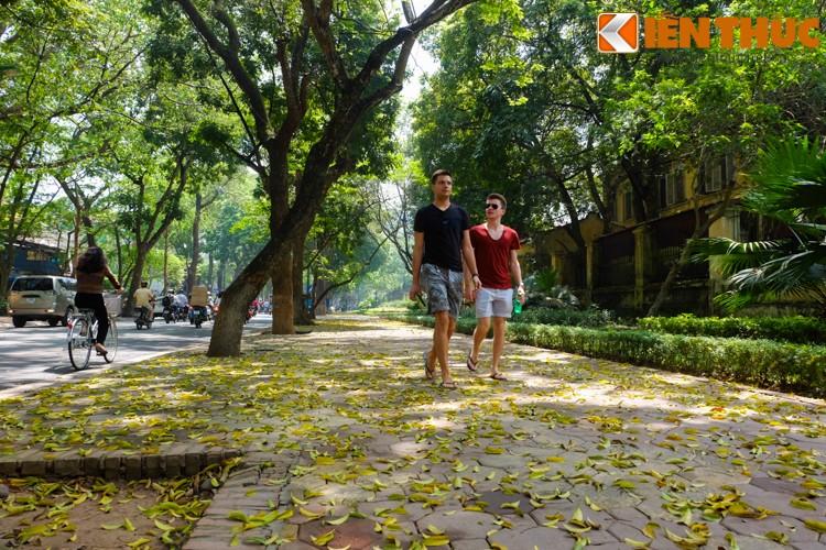 Anh: Lang man nhung con duong trai day la vang o Ha Noi-Hinh-16