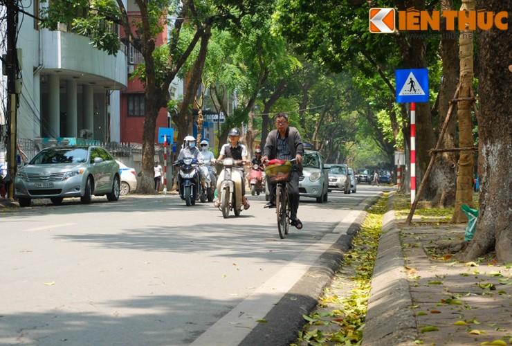 Anh: Lang man nhung con duong trai day la vang o Ha Noi-Hinh-19