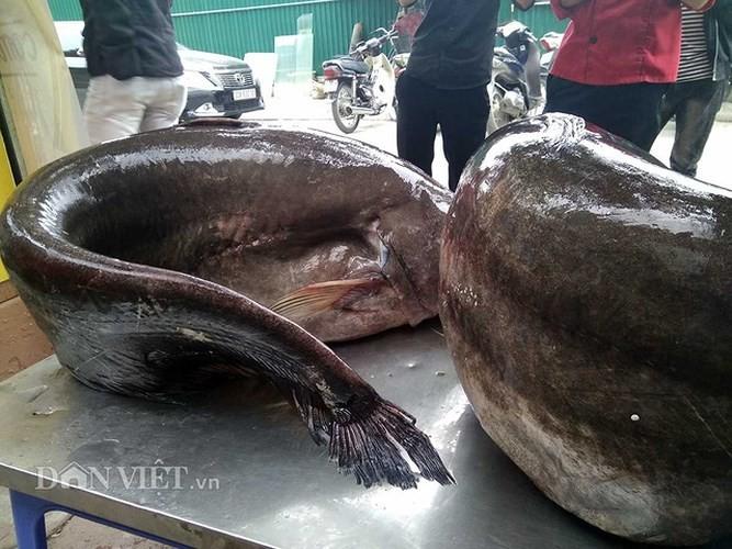 """Nha hang Ha Noi lai mo cap ca leo """"khung"""" phuc vu khach-Hinh-3"""