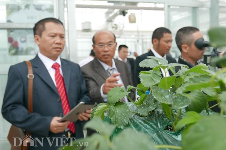 Kham pha thien duong rau, cu, qua doc la o Han Quoc-Hinh-4