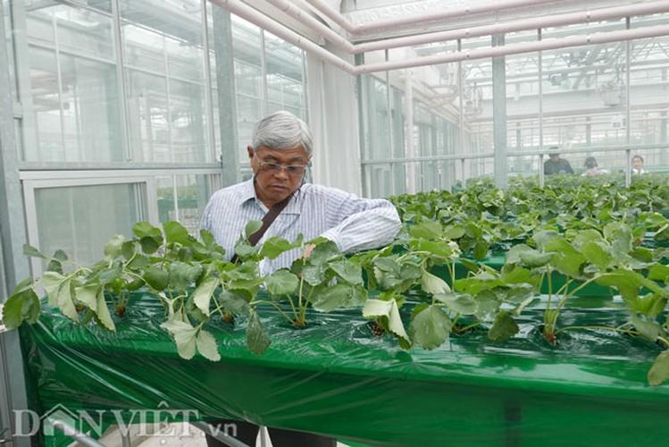 Kham pha thien duong rau, cu, qua doc la o Han Quoc-Hinh-6