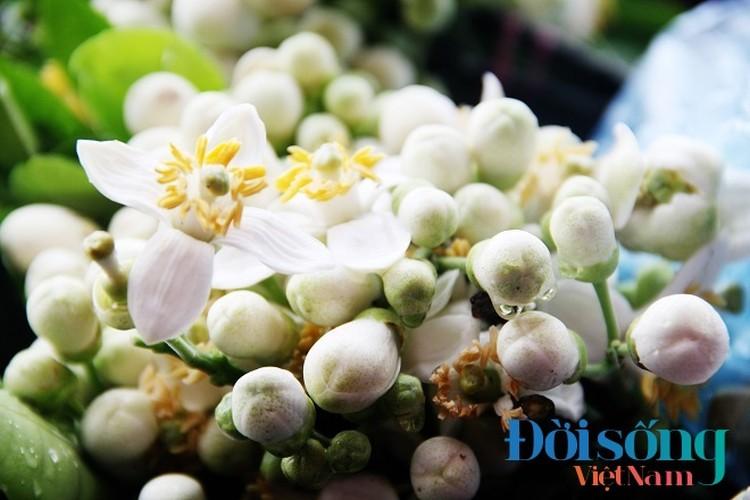 Hoa buoi xuong pho, moi chum hoa dat ngang bat pho-Hinh-15