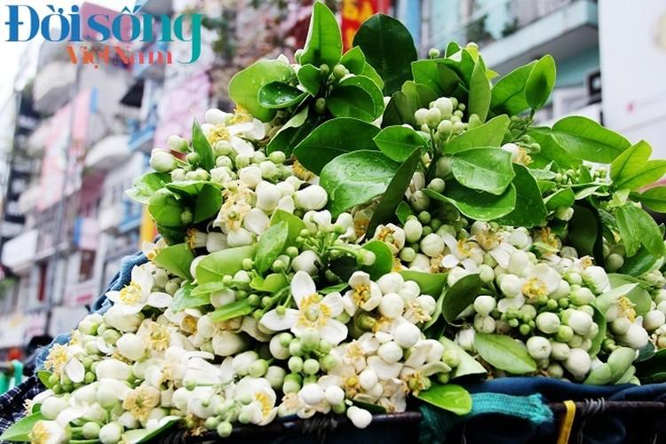 Hoa buoi xuong pho, moi chum hoa dat ngang bat pho-Hinh-19