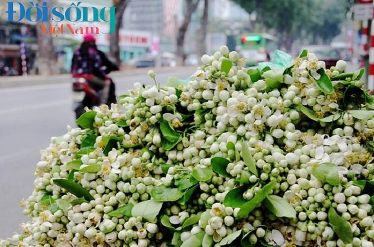 Hoa buoi xuong pho, moi chum hoa dat ngang bat pho-Hinh-7