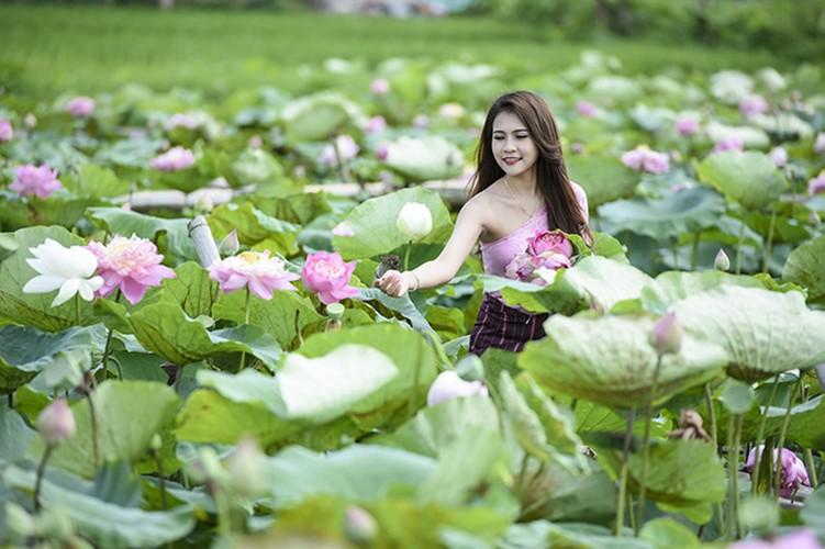 Nu sinh Lao dep diu dang trong bo anh sen Viet-Hinh-5