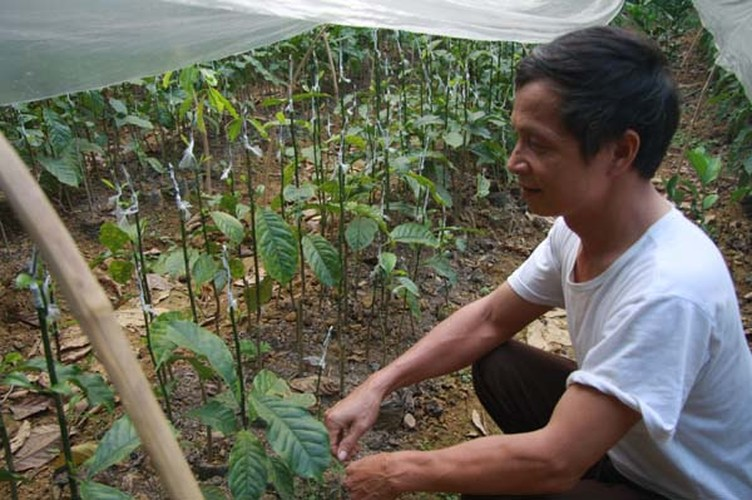 Lam giau o nong thon: Mot cay doi doi ca...chi vang-Hinh-7