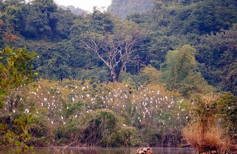 """""""Lac troi"""" truoc canh dep Thung Nham dip cuoi tuan-Hinh-7"""
