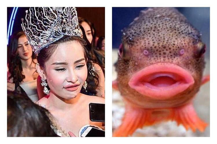 Tan Hoa hau Dai duong 2017 bi dan mang che anh nem da-Hinh-4