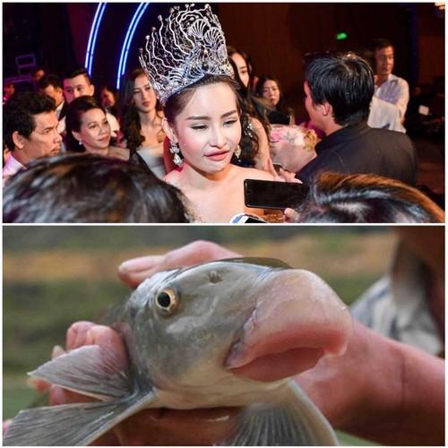 Tan Hoa hau Dai duong 2017 bi dan mang che anh nem da-Hinh-9